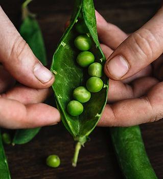 beans-close-up-colors-1446267.jpg
