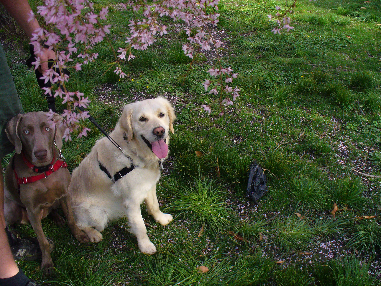 Upward Dog Training Asheville