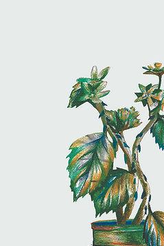 fran hammond leonora 2 website.jpg