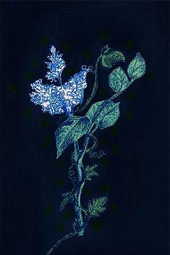fran hammond flower website.jpg