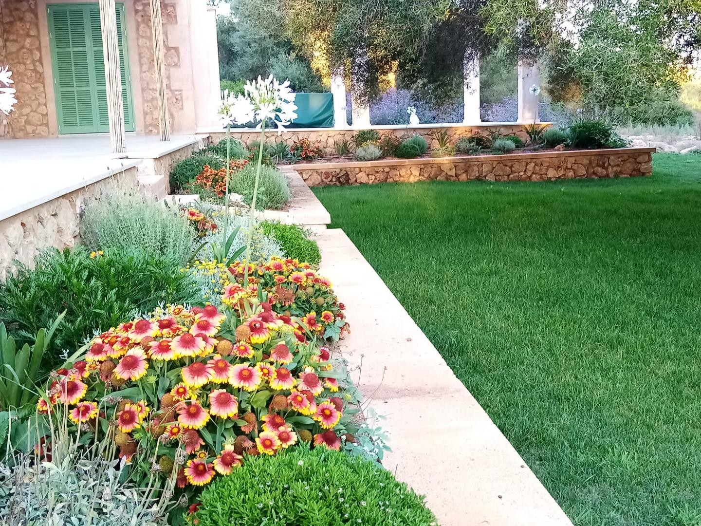 Pretty garden plants