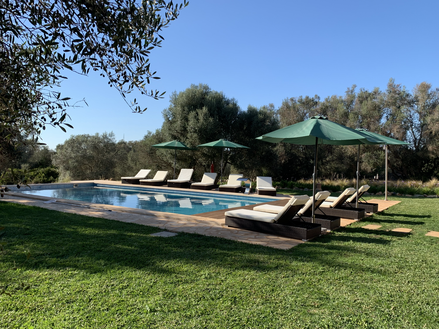 View to pool from garden