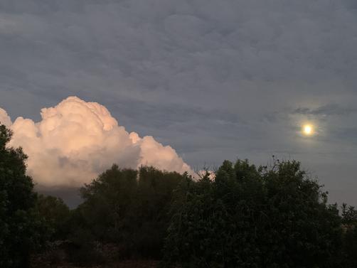 Evening at Los Hibiscus