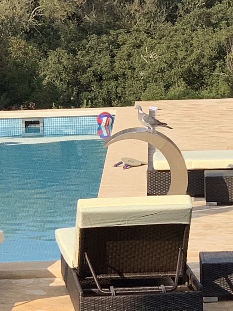 Pool & Pigeon