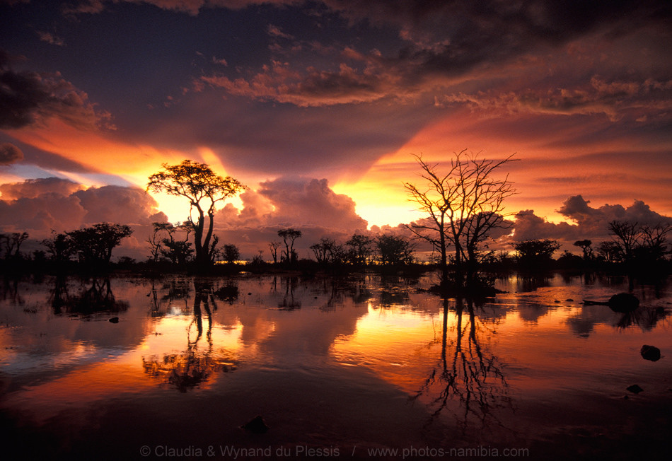 Flooded savanna in Etosha after a heavy downpour, Namibia