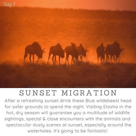 Day7_Sunset_Migration.jpg
