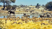 Hot, flat & crowded: Etosha in the Dry Season