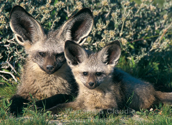 Take Better Photos In Namibia: How to find & photograph cute baby animals in Etosha
