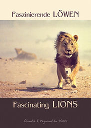Fascinating lions