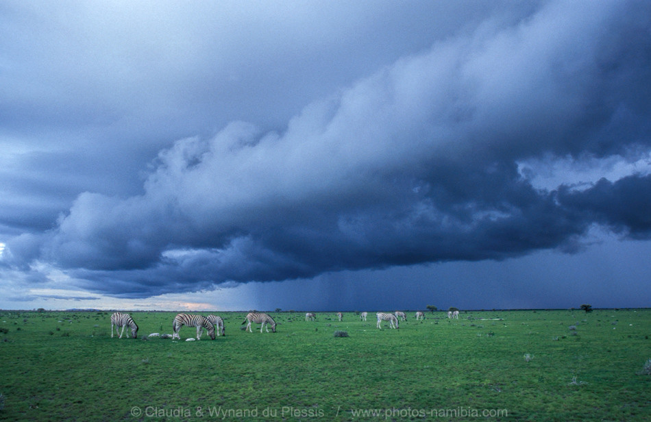 Rainy clouds over the grass savanna in Etosha
