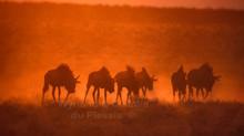 Fifty Shades of Orange: How to take amazing sunset pictures in the Etosha National Park, Namibia