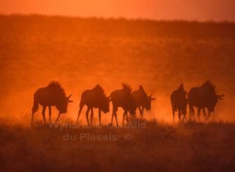 Fifty Shades of Orange: How to take amazing sunset pictures in the Etosha National Park, Namibia