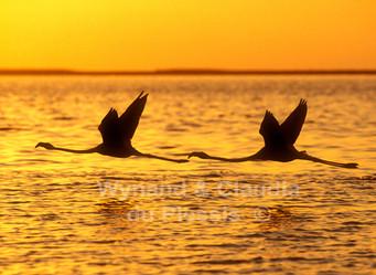 Namibia Travel: How to Take Amazing Photographs in the Etosha National Park, Namibia: The Rainy Seas