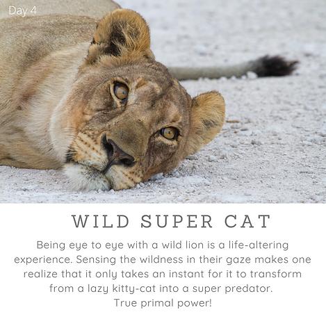 Day4_Wild Super Cat.png