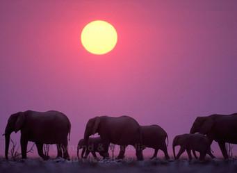 Epic Elephants of Etosha, Namibia