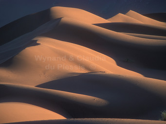 The Namib Desert: How to photograph the splendid dunes of the Namib Desert