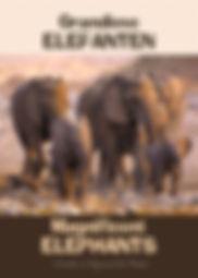 Magnificent elephants