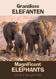Magnificent elephants
