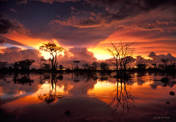 Flooded savannah after a rain storm in the Etosha National Park, Namibia