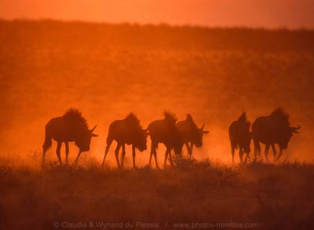 How To Take Amazing Sunset Images In The Etosha National Park