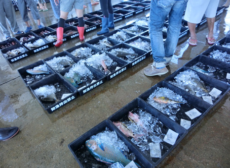 11期生第2回講座 南城市の漁業&久高島の歴史文化体験ツアー