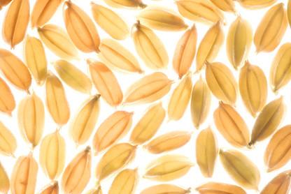 和草成分 - 米糠