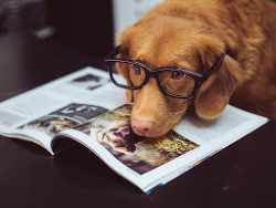 Dog with glasses reading magazine