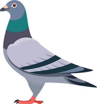 abb_pigeon.png