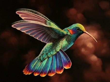 Cerchio sciamanico: il volo del colibrì