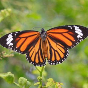 L'ala sinistra della Farfalla - Svegliarsi nella Terra Sogno