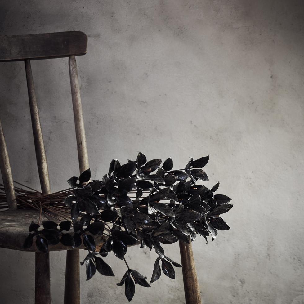 Black WILD TULIP
