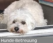Hunde-Betreuung