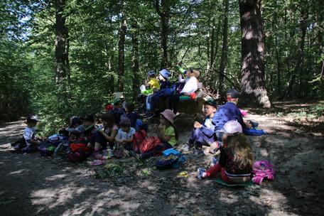 Einfach wunderbar: Ein Picknick im Wald