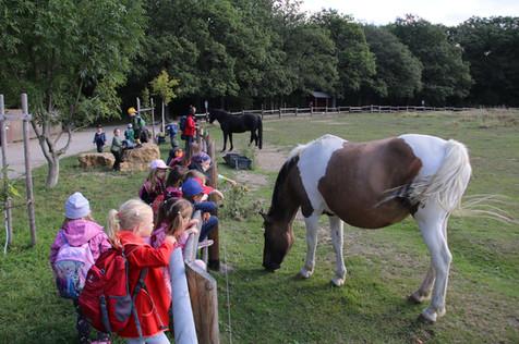 Wir gehen auf Tuchfühlung mit den Pferden auf der Pferdekuppel, Fuchsfarm