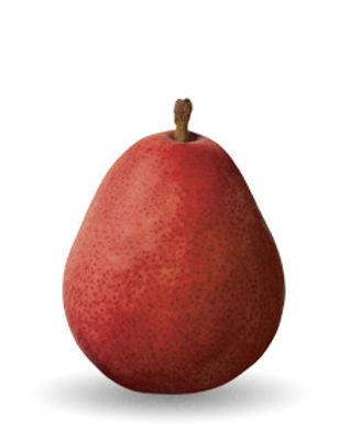 red-anjou-pear.jpg