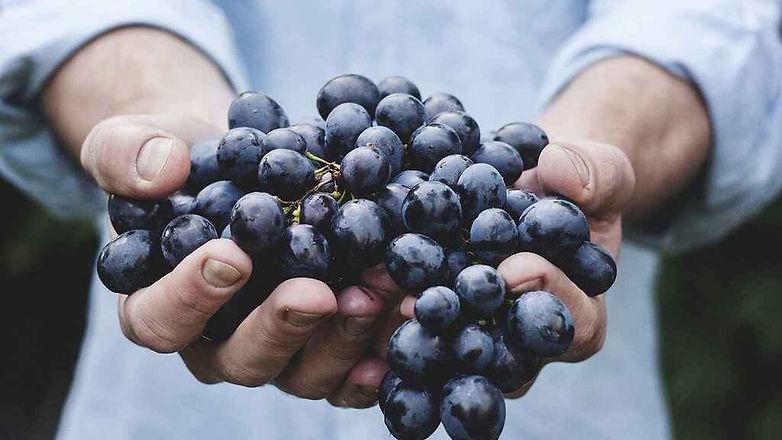 fruta-superalimentos-nutricion_508459707