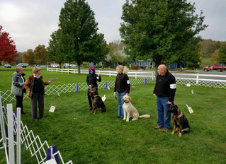 Clients excel in First Ever Dog Trial