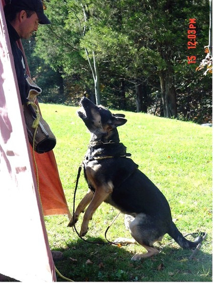Emma Training BarkHold 101606.jpg
