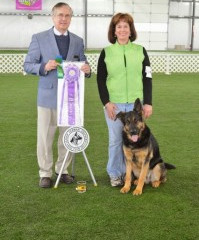 Ann Stock with Winston Earn AKC Beginner Novice Obedience Title