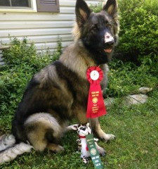 Puppy-Wuppy Students do well at Weekend Shows