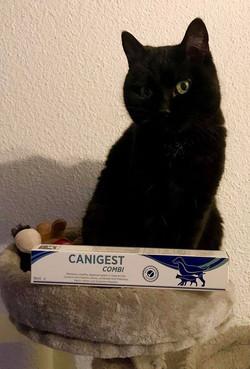 CANIGEST COMBI 🐱🐶