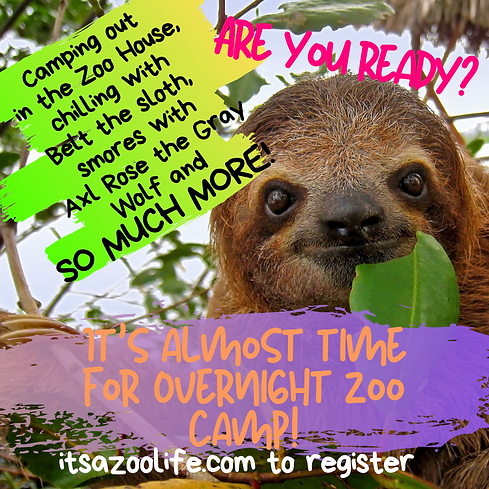 overnight zoo camp.png