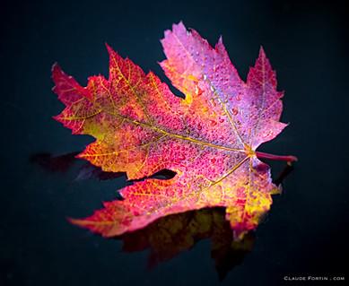Les couleurs de l'automne... un plaisir pour les yeux !