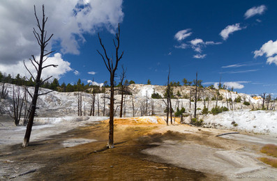 Un des étranges paysages de YellowStone. Le sol est complètement recouvert de calcaires