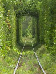 Passage au vert / Cap Tourmente
