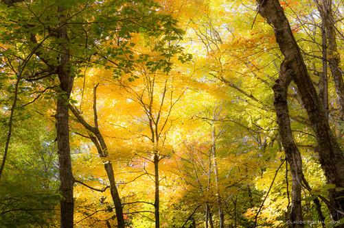 L'automne tout simplement