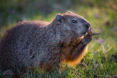 Marmotte / Base de plein air Ste-Foy