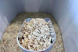organic-oats