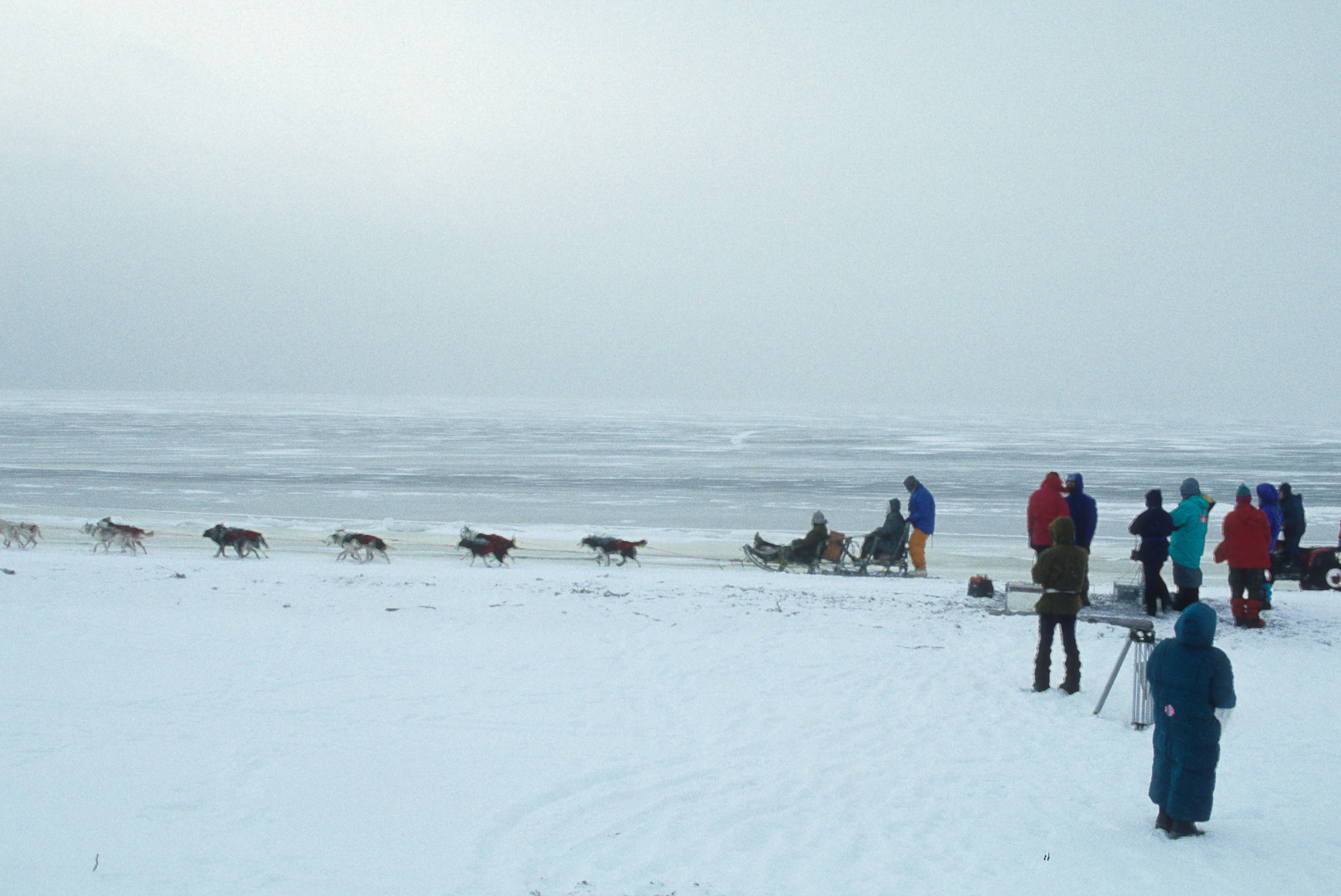 SB filming dogsled.jpeg