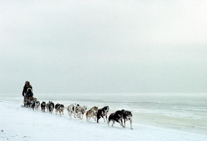 SB line of dogs.jpeg
